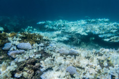 Rising sea temperatures killed more than a third of Guam's coral reefs