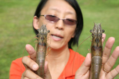 Hui Gong Jiang Holding Shrimp