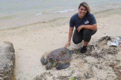 Josefa Muñoz tends to a sea turtle