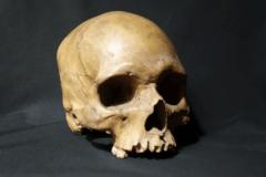 Ancient Micronesian skull