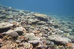 Piis Patch Reef on the Micronesian Island of Chuuk