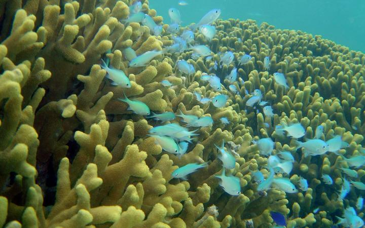 Guam researchers find climate change data in coral