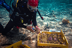 Researchers from UOG will examine how the structure of the island's coral reefs may be affected by climate change.