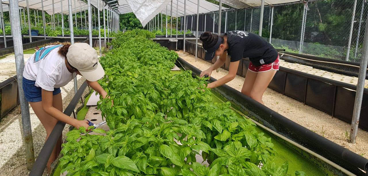 Triton farm students learn about aquaponics